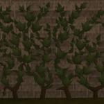 012 ivy