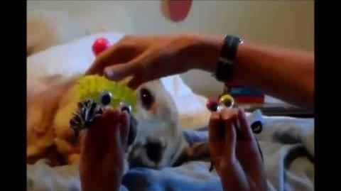 Oobi Babies - The Crowning Moment