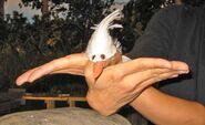 Oobi-seagull-costume