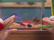 Oobi-Petting-Zoo-hamster