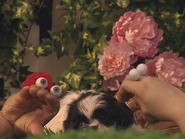 Oobi-Kako's-Puppy-petting-the-puppy