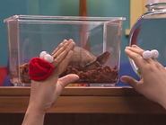 Oobi-Petting-Zoo-turtle