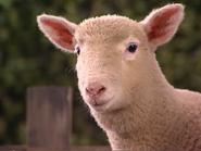 Oobi-Petting-Zoo-lamb-close-up