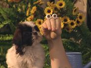 Oobi-Kako's-Puppy-ending