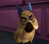 Mcquizzy dog