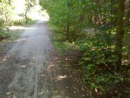 Bild 9 Waldweg nach Autobahnbrücke
