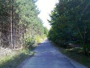 Bild 10 Asphaltweg nach Autobahnbrücke