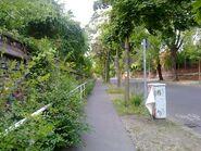 Bild 3 Liesenstraße Asphalt
