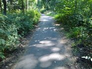Bild 6 Waldweg parallel Kuckucksruf