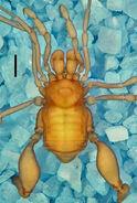 Cryptogeobiidae