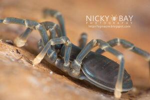 Sandokanidae 2 - Singapore by Nicky Bay
