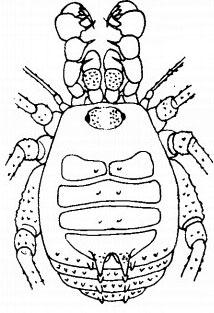 Haitimera paeninsularis