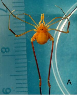 S - undescribed genus MNRJ 4558