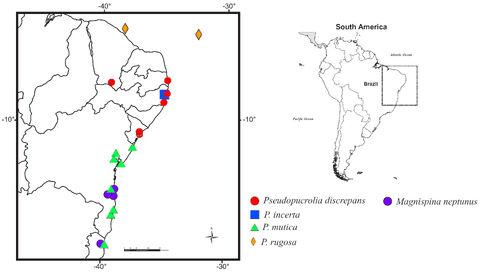 Mapa Pseudopucrolia e Magnispina