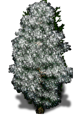 File:Snow Tree.png