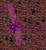 Reddragonflyicon