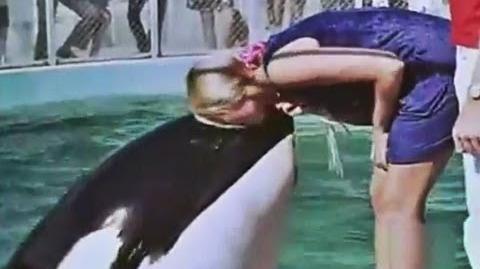1971 Hugo, la orca asesina Acuario de Miami - Hugo, the killer whale Miami Seaquarium