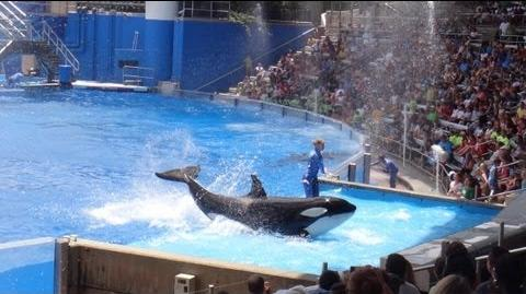One Ocean (Full Show) SeaWorld Orlando