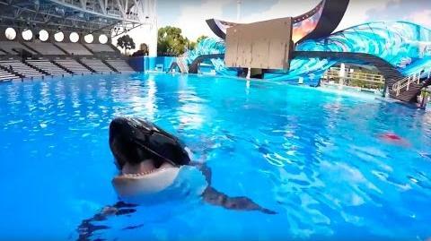 Meet Trua! SeaWorld®