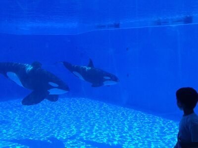 Tilikum and malia 2734