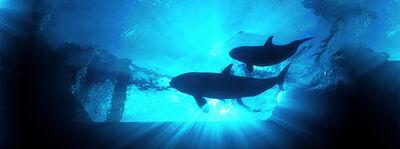 75165c13c1354fb0bff375ef060e6d3e pic-sw-killer-whale-longevity-02--940x350