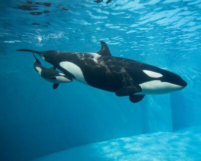 Kalia's calf 34