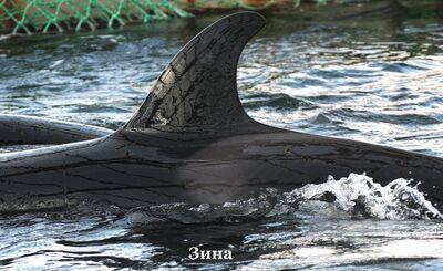 Zina 9794