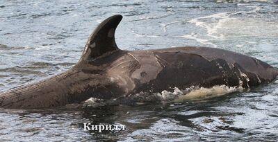 Kirill 9743