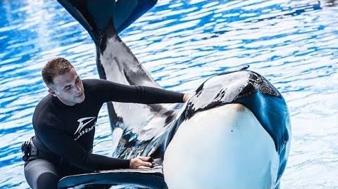 Meet Makaio! SeaWorld®