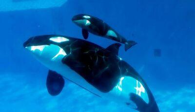 Whale t540
