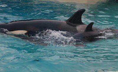 Kalia's calf 28