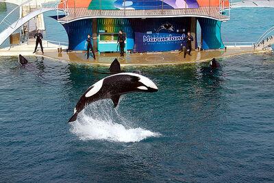 2009 11 24 spect orques jour 4