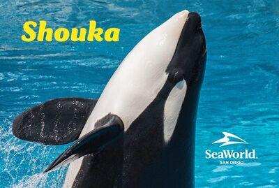 Shouka 9754