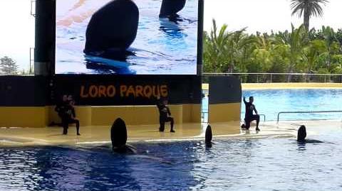 Orca show Loro Parque