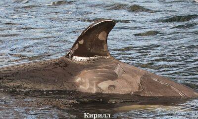 Kirill 49795