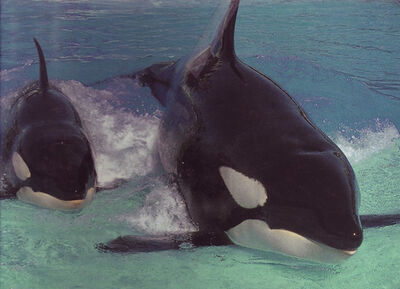 From Killer Whale