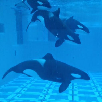 Cetacean lover 1