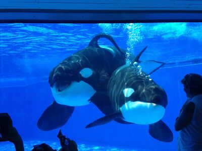 Tilikum and malia 93734