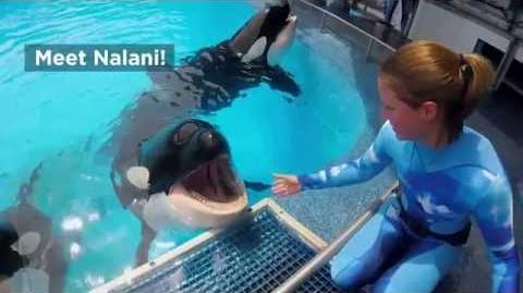 Meet Nalani SeaWorld®