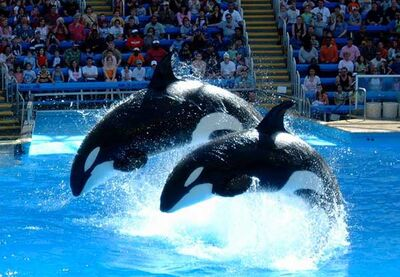 SeaWorld-San-Antonio