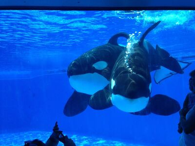 Tilikum and malia 87474