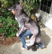 Wolf Skin Ritual 6 by lupagreenwolf