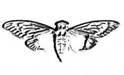 CicadaLogo