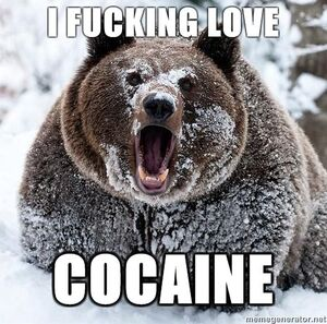 More bear i fucking love cocaine Random Funny-s466x462-69802-580