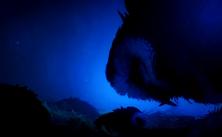 Куро и погибшие птенцы