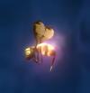 Stingerfly