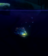 Fish WotW