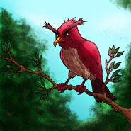 Scarlet-Aggrokeet