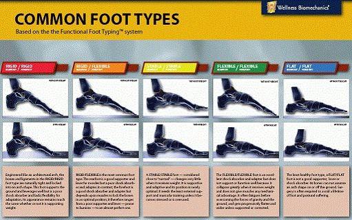 File:Common foot types.jpg