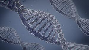 Lopovius DNA